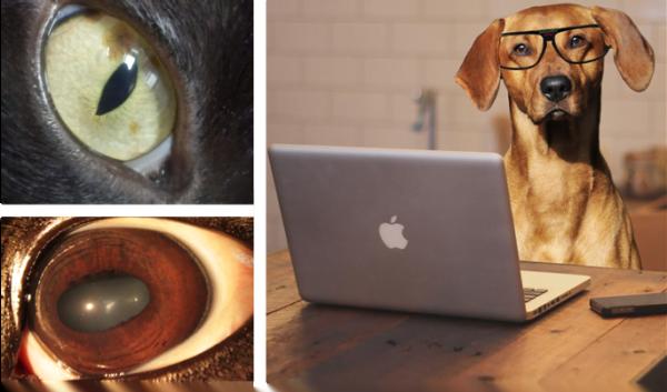 Online Ausbildung Iridologie für Tiere 1