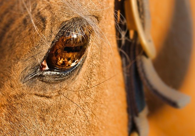 horse-536103_640